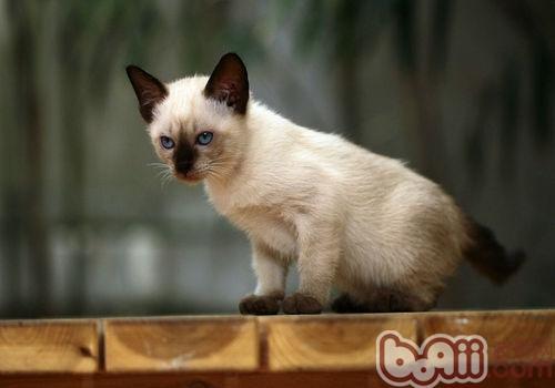 猫口炎可以吃阿莫西林吗图片