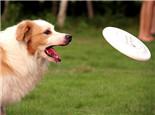 训练狗狗衔取物品小贴士