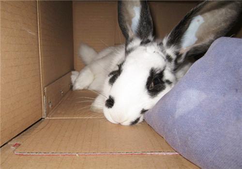 宠物兔也会挑食吗?