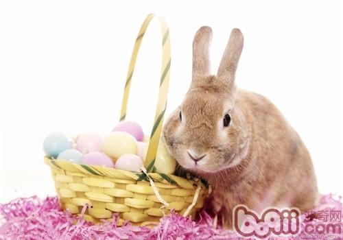 壁纸 动物 兔子 500_350