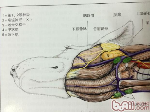 动物解剖组织学 pdf