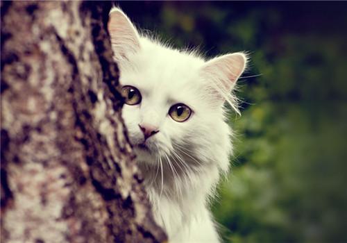 测智商图片题动物