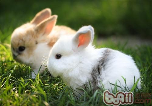 宠物兔美味饲草大合集