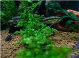 如何维持藻类和水草的平衡