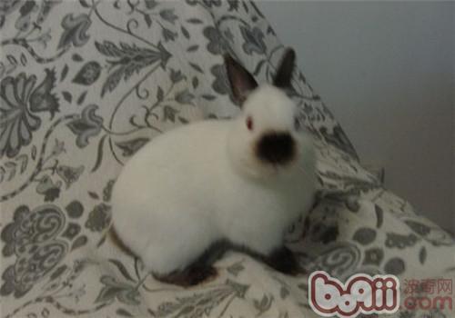 教小兔子上厕所的方法