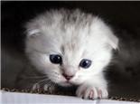 斷奶后的仔貓死亡原因