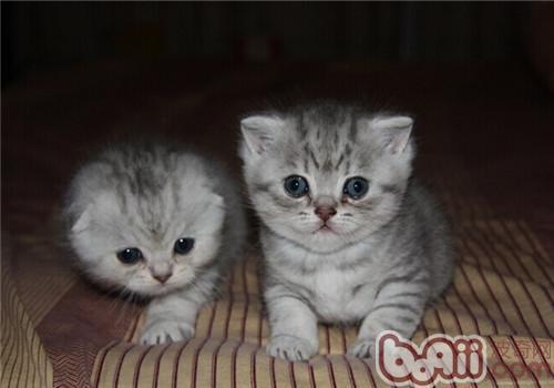 猫肝吸虫病的的诊断及治疗
