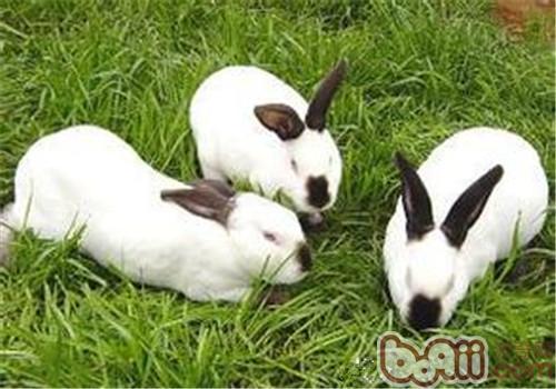 怎样合理降低养兔成本