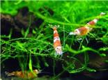 虾、蟹养殖中的常用补钙方法
