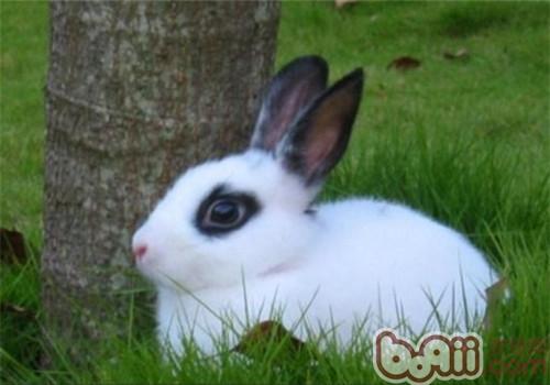 兔子需要洗澡吗图片