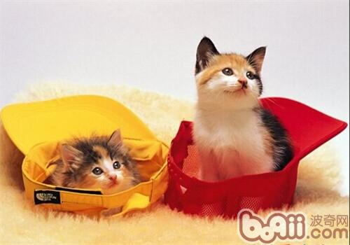猫咪翻倒垃圾桶 gif