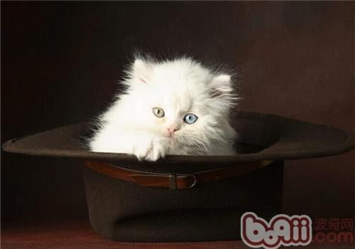 为什么要给猫咪吃猫草