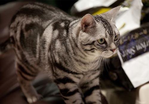 幼猫低血糖-波奇网百科大全