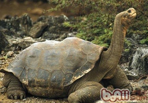 陆龟怎么养