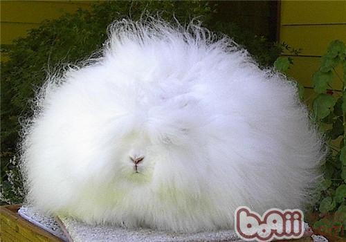 兔眼睛可爱图片