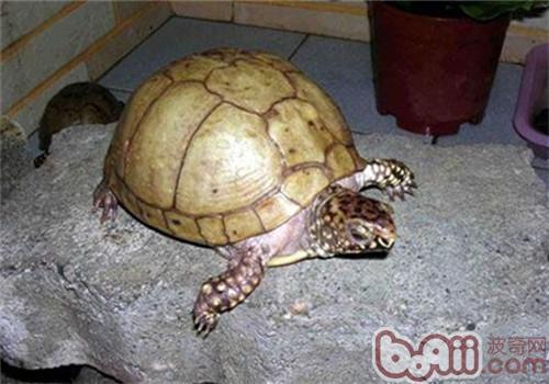 龟龟夏季饲养注意事项