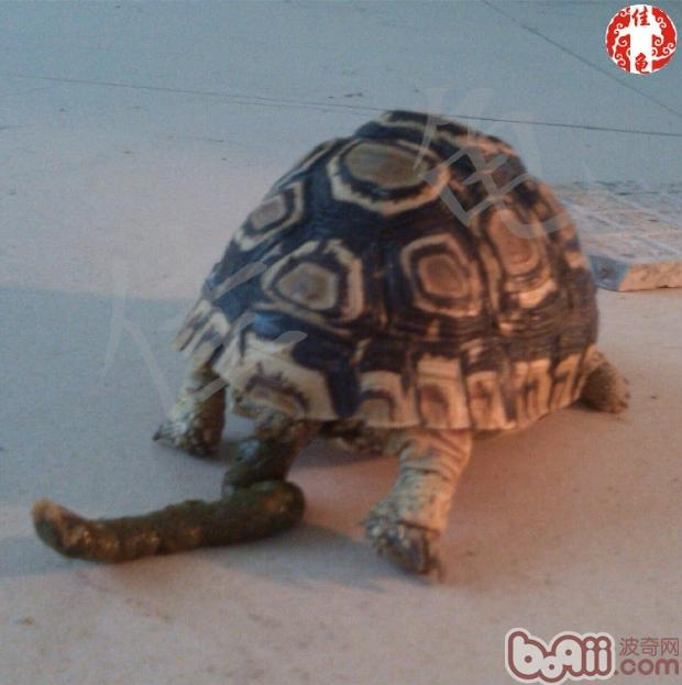 你认识这些陆龟饲料吗?