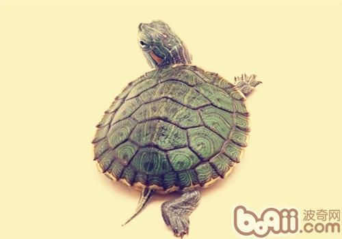 如何给龟安置一个家?