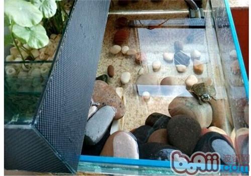 新手家庭养龟必备常识