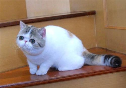 猫咪是肉食动物,所以肠道的长度相对于食草的动物来说是比较短的,而