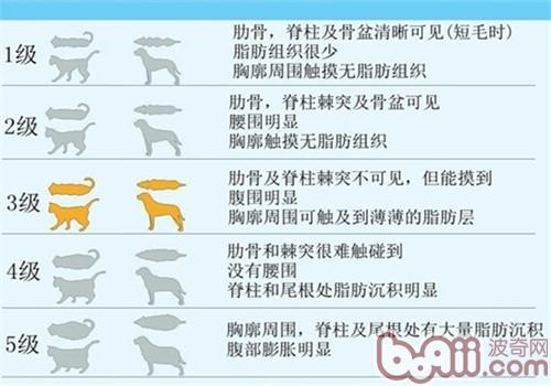 关于宠物的肥胖问题