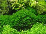 必威官网西汉姆联箱中常见的藻类