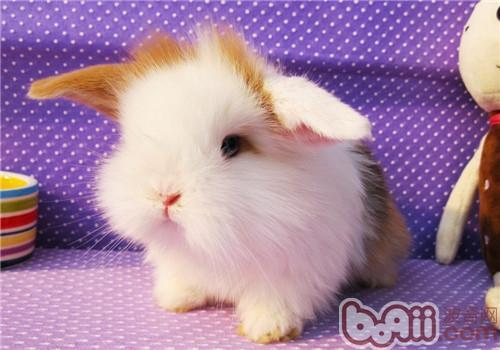 兔子窝需要准备哪些东西? 小宠环境-波奇网百