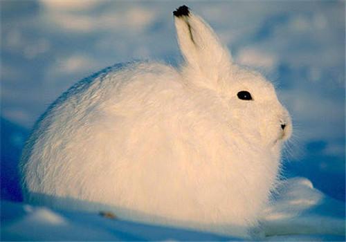 怎样帮助兔子过冬