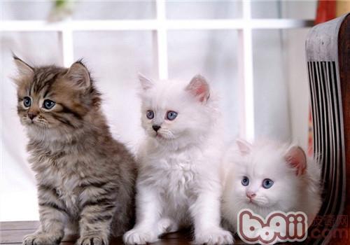 肥皂雕刻图片大全小猫