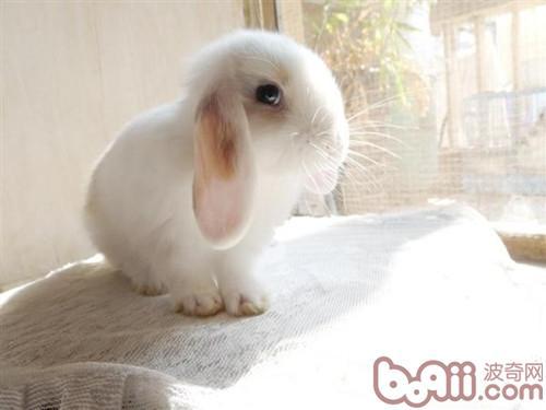 报纸做动物兔子