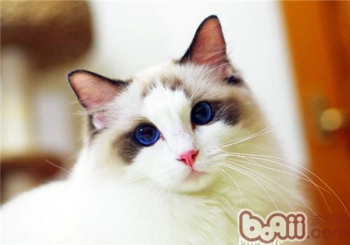 生病猫头像可爱