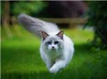 新生仔貓假死有辦法