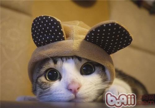 猫咪冬季要穿衣服吗?