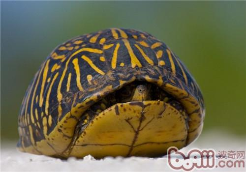 佛罗里达箱龟的食物选择