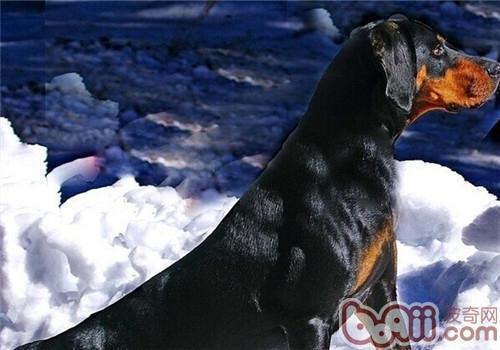 www.ca88.com 2