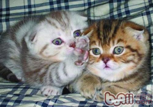 猫咪的断趾手术——它还是猫吗