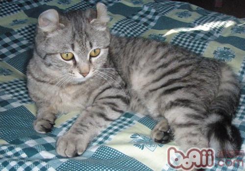 你知道饮食不当可导致猫咪消瘦吗
