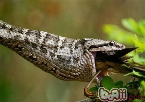 蛇岛腹的生活环境