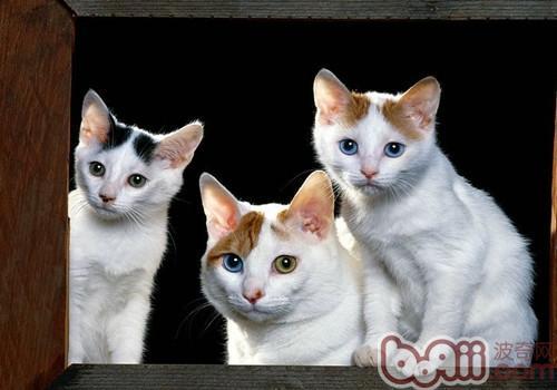 猫砂价格及猫砂种类介绍