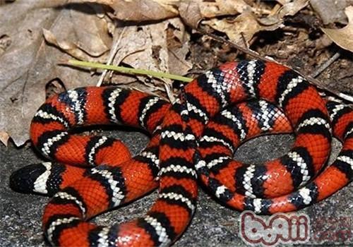 山王蛇的生活环境