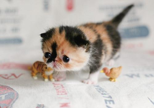猫猫多久剪一次趾甲