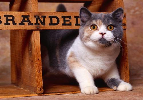 你了解加菲猫的寿命有多久吗