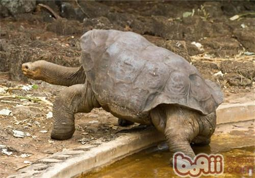加拉帕戈斯象龟的生活环境