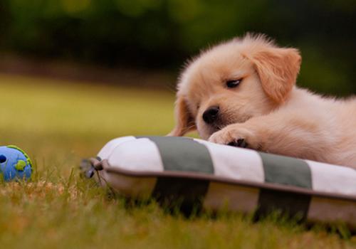 动物照片—睡姿百态