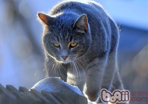 貓咪耳朵發燙正常嗎