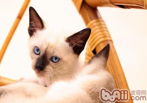 猫咪家中搞破坏如何阻止