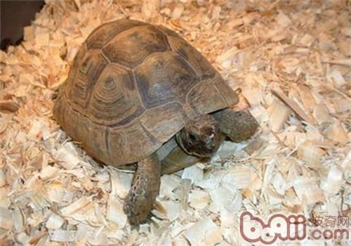 如何提高陆龟的运动量