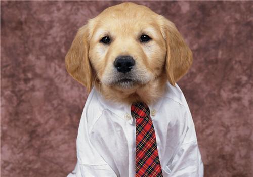 给狗狗穿衣服的注意事项