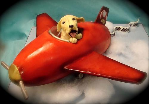 狗狗乘飞机小贴士