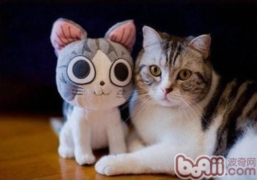 猫咪天生爱干净大家都知道,如果要想保持猫咪的卫生,主人还是要经常帮